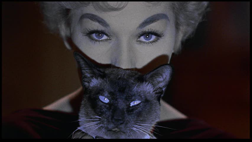 Happy National Cat Day From Pyewacket | Movie Paws