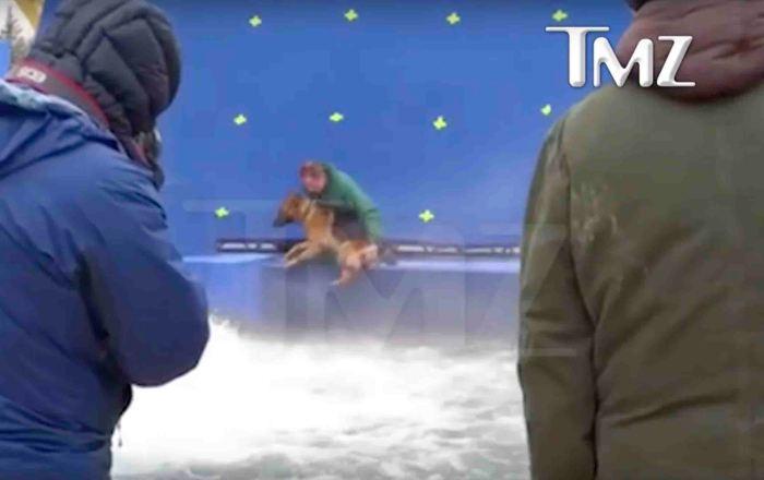 a-dogs-purpose-tmz-footage-abuse