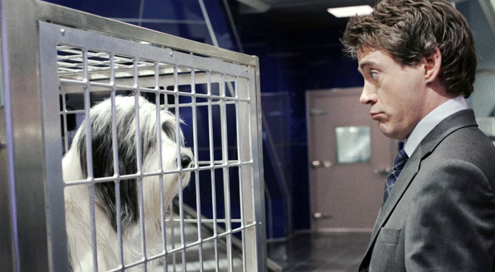 rdj-shaggy.dog
