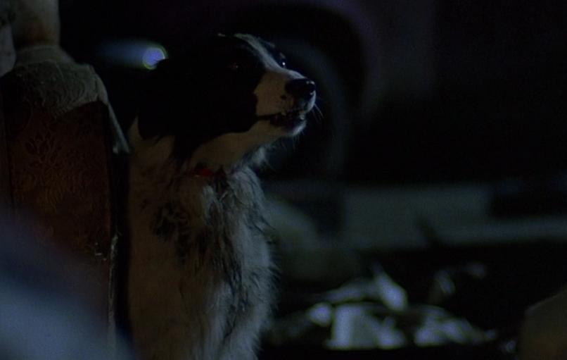awwil-dog2