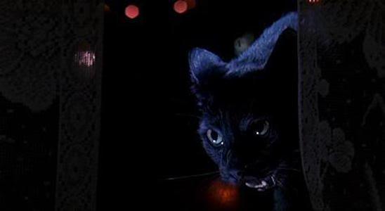 black-cat-argento
