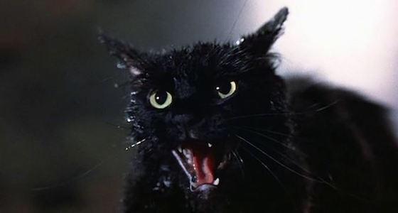 black-cat-tales