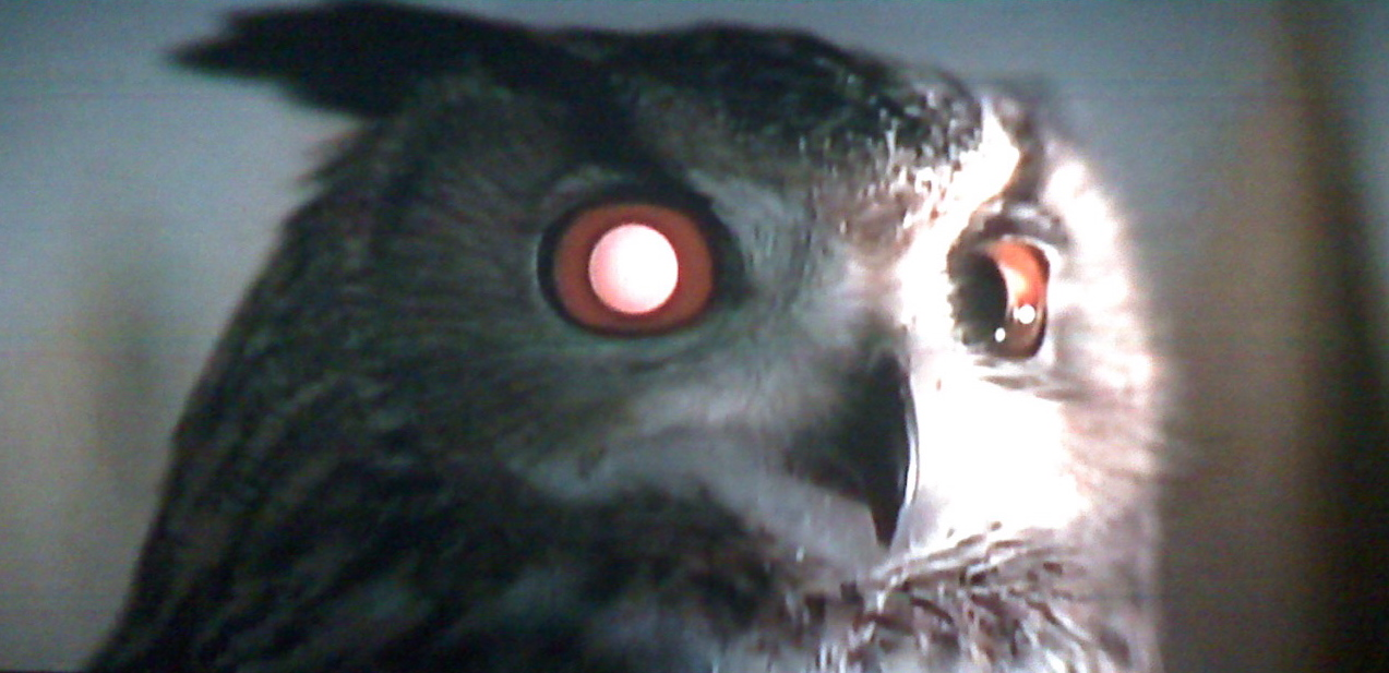 Owls, Snakes and Unicorns: The Animals of 'Blade Runner' | Movie Paws