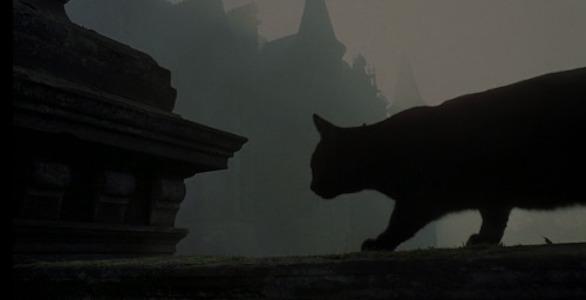 hellhouse-cat