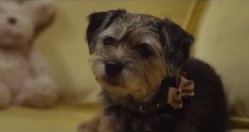 Owen Wilson Talks About Daisy The Dog In Wonder Spoilers Movie