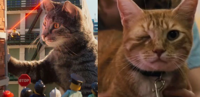 cats-2017