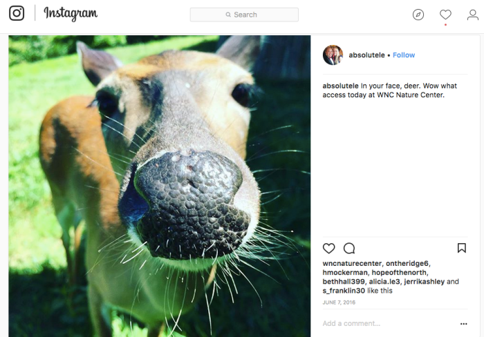 deer-instagram.png
