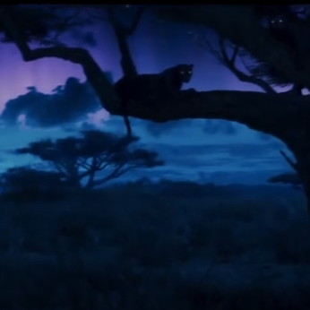bp-panther-in-trees