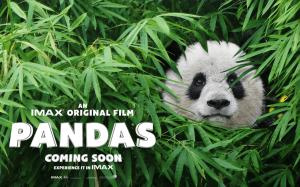 pandas-movie