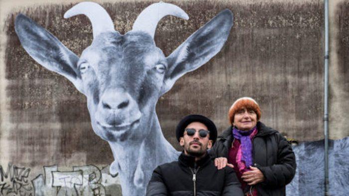 varda-goat