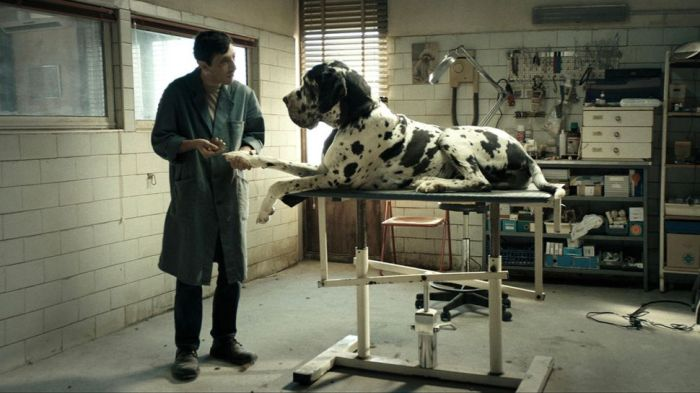 dogman-movie