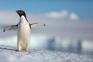 penguins-disney