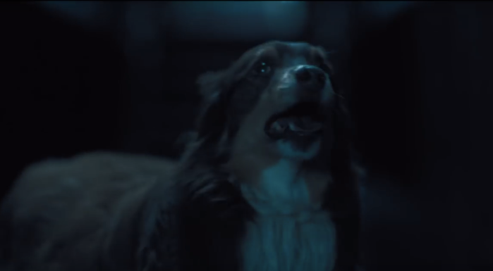 hereditary-dog