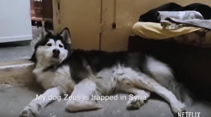 dogs-zeus