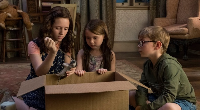 The Haunting Of Hill House A Box Of Kittens Movie Paws