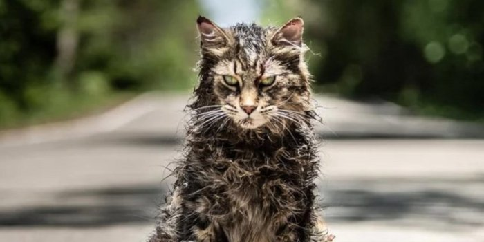 pet-sematary-cat