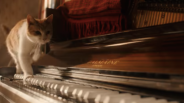 cat-bohemian-rhapsody