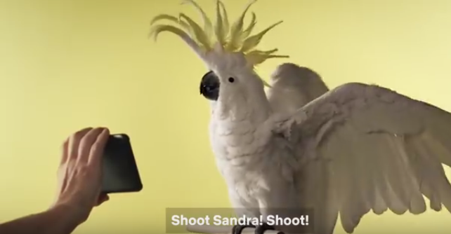Watch Real Birds Audition For And React To Bird Box Movie Paws