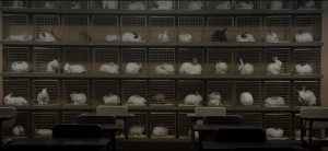 us-trailer-bunnies