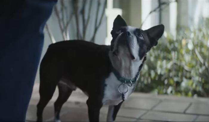 dog-alexa-ad2