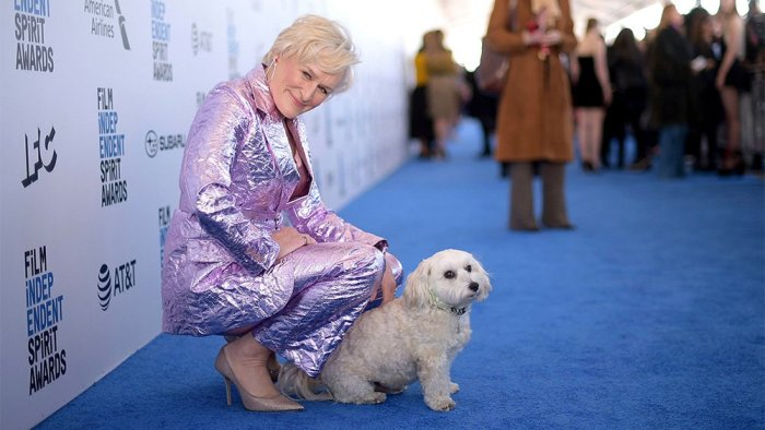 glennclose-dog