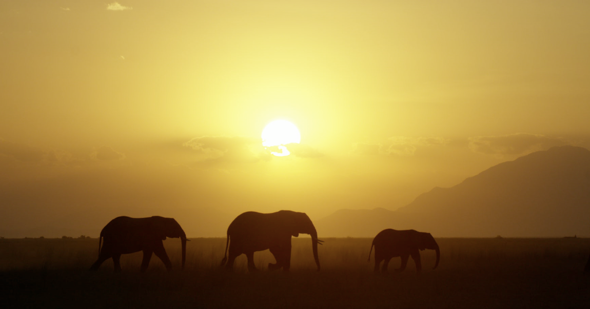 elephant-queen